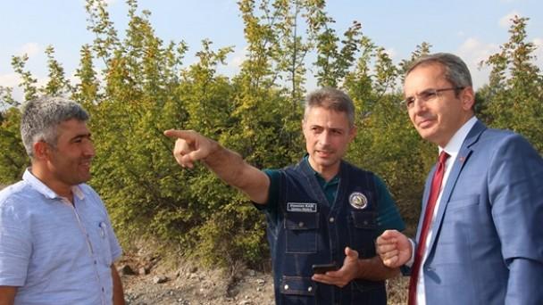 Tosya'da bal ormanı kuruluyor