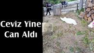 Tosya'da cevizden düşen kişi öldü
