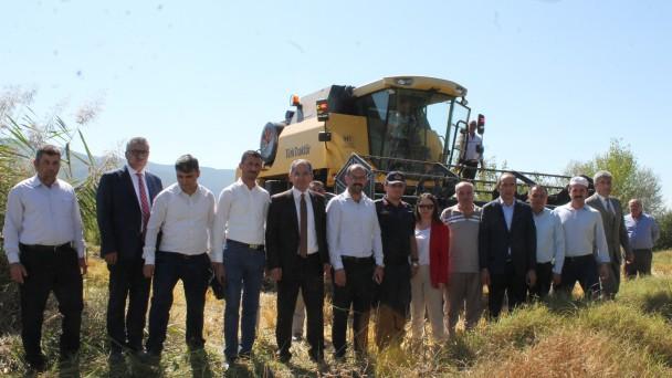 Tosya'da Pirinç Hasadı Başladı