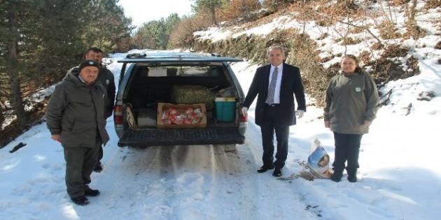 Tosya'da yaban hayatı için doğaya yem bırakıldı