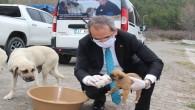 Kaymakam Deniz Pişkin sokak hayvanlarına yiyecek bıraktı