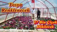 Belediye Tosya'yı Rengarenk Yapacak