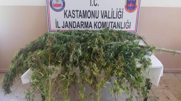 Tosya'da uyuşturucu operasyonu, 2 gözaltı