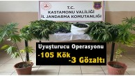Jandarmadan Tosya'da kenevir operasyonu