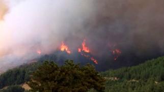Son Dakika! Yeşilgöl'de Yangın