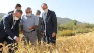 Kaymakam Deniz Pişkin: Tosya Pirincinde %300 saha artışı sağladık