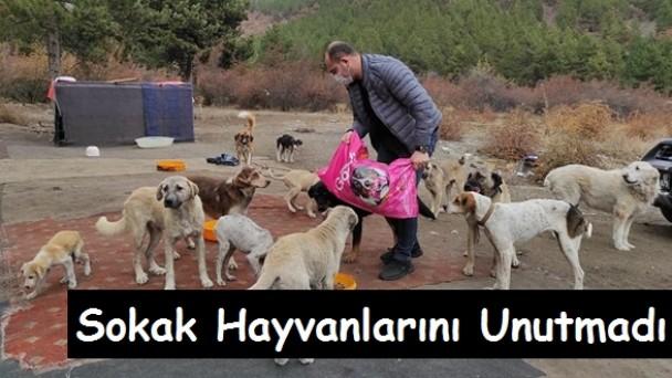Tosya Belediyesi Sokak Hayvanlarını Unutmadı