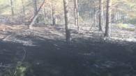 Tosya'da yangın, 60 arı kovanı telef oldu