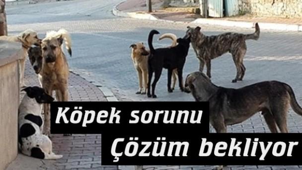 Sokak Köpekleri Halkı Tedirgin Ediyor