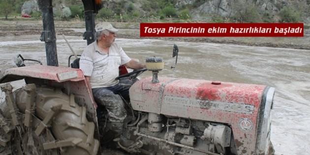 Tosya Pirincinin ekim hazırlıkları başladı