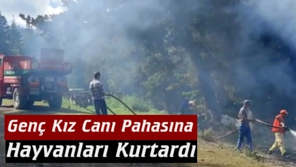 Tosya'da yayla evi yanarak kül oldu