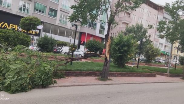 Tosya'da fırtına ağaçları devirdi
